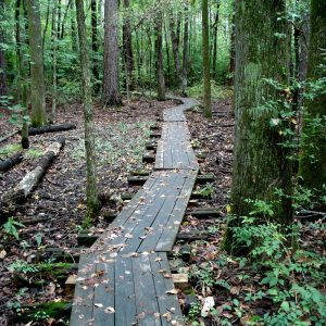 Boardwalk constructed by Eagle Scouts in The Wetlands