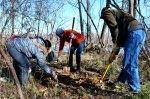 Volunteers plant Virginia bluebells at Pony Pasture