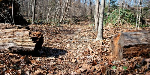 The Crooked Branch Ravine is a little-known park tucked away in the Westover Hills neighborhood