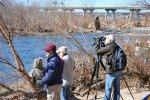 Members of the Richmond Audubon Society watch for great blue heron