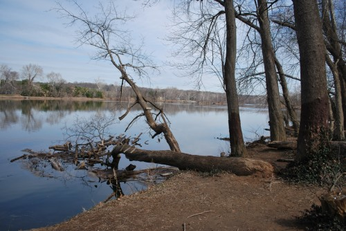 The rope swing tree at Huguenot Flatwater had been a constant source of fun and entertainment for thrill-seeking river rats on the James River